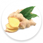 PNG-a_0005_kisspng-ginger-tea-ginger-ale-ginger-beer-extract-5b2e06596f9203.049284111529742937457.png